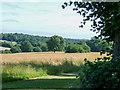 TQ2897 : Grassland, Trent Park, Cockfosters, Hertfordshire by Christine Matthews
