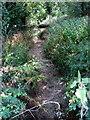 SP7424 : Empty brook by Hogshaw Road by Philip Jeffrey