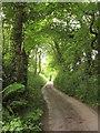 SX4263 : Lane to Tinnel by Derek Harper