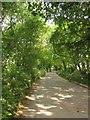 SX4263 : Tree-lined road, Wayton by Derek Harper
