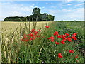 TL3594 : Poppies and wheat at Flood's Ferry by Richard Humphrey