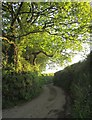 SX3968 : Lane to Brendon by Derek Harper