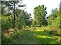 TQ2130 : Ride, St. Leonard's Forest by Robin Webster