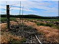 SE0845 : Clearing in the Plantation on Rombalds Moor looking South by Chris Heaton