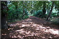 TL0750 : Path through the woods by Philip Jeffrey