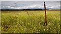 NX2460 : Dergoals Moss : Week 33