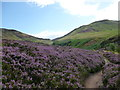 NO1806 : Path through the heather by Alan O'Dowd