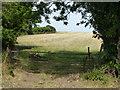 TL1590 : Paddock gates on Folksworth Road by Richard Humphrey