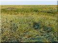 TF6229 : Salt marsh near Peter Black Sand by Mat Fascione