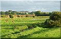 SJ9321 : Radford Meadows near Stafford, Staffordshire : Week 35