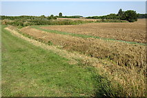 SP9746 : Ditch and stream by Philip Jeffrey