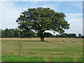 SU8370 : Farmland near Binfield by Alan Hunt