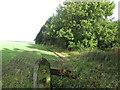 SE3211 : Barnsley Boundary Walk along Wheatley Wood by John Slater