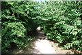 TQ4569 : Footpath, Chislehurst Common by N Chadwick