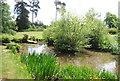 TQ6039 : Pond, Dunorlan Park by N Chadwick