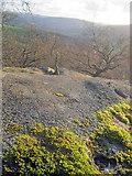 SK2669 : Clifftop at Chatsworth Park by Trevor Rickard
