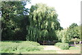 TQ4872 : Weeping Willows, River Cray by N Chadwick