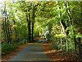 SX7171 : Autumn scene near Spitchwick : Week 46