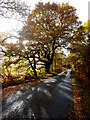 NN2782 : Sunshine through autumn oak, Glen Roy by Andy Waddington