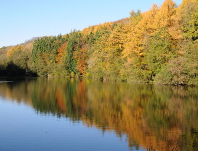 SO8300 : Autumn in Woodchester Park by Philip Halling