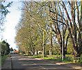 TL4055 : Barton: New Road by John Sutton