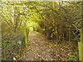 SJ8083 : Wooded Path, Manchester Airport Runway Trail by David Dixon