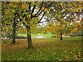 ST5869 : Tree by Hartcliffe Way by Derek Harper