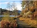 NN4600 : Track, Loch Ard : Week 46