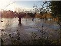 SP2965 : River Avon by Emscote Gardens, Warwick 2012, November 23, 09:09 by Robin Stott