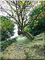 SE0820 : Tree arched over Church Lane by Humphrey Bolton