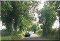 N9259 : Tree lined road approaching the Hill of Tara by Eric Jones