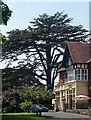 ST5675 : Cedar, Saville Road, Bristol by Stephen Richards