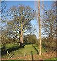 TL3266 : Conington Hall: winter trees by John Sutton