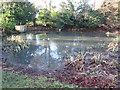 SP8605 : Village pond, Dunsmore by Peter