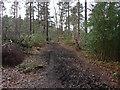 SU8363 : Bridleway, Edgbarrow Woods by Alan Hunt