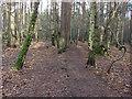 SU8362 : Edgbarrow Woods by Alan Hunt