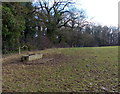 SK6202 : Cattle trough and field near Stackyard Spinney by Mat Fascione