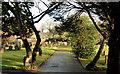 J3170 : The Friends Burial Ground, Balmoral, Belfast by Albert Bridge