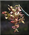ST5577 : Winter flower, Hazel Brook valley by Derek Harper