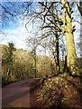 ST5577 : Path, Hazel Brook valley by Derek Harper
