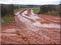 ST2430 : Muddy field entrance : Week 4