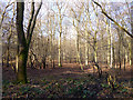 SU8689 : Horton Wood by Robin Webster