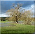 SP7211 : Tree standing in the flooded River Thame by Rob Farrow