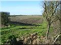 TL3476 : View from the B1086 near Cuckoo Bridge Nursery by Marathon
