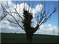 TL5763 : Farmland near Swaffham Prior by Richard Humphrey
