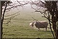 TA1730 : Ewe and lamb, near Preston (E Yorks) : Week 9