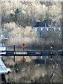 NR7992 : Reflections: Bellanoch harbour : Week 8