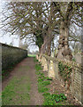 TL3746 : Meldreth: footpath by the churchyard by John Sutton