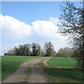 TL1381 : Track to Steeple Gidding by John Sutton