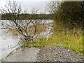 NY2032 : Northern Shore of Bassenthwaite Lake by David Dixon